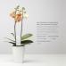 XIAOMI Flower Care Smart Monitor